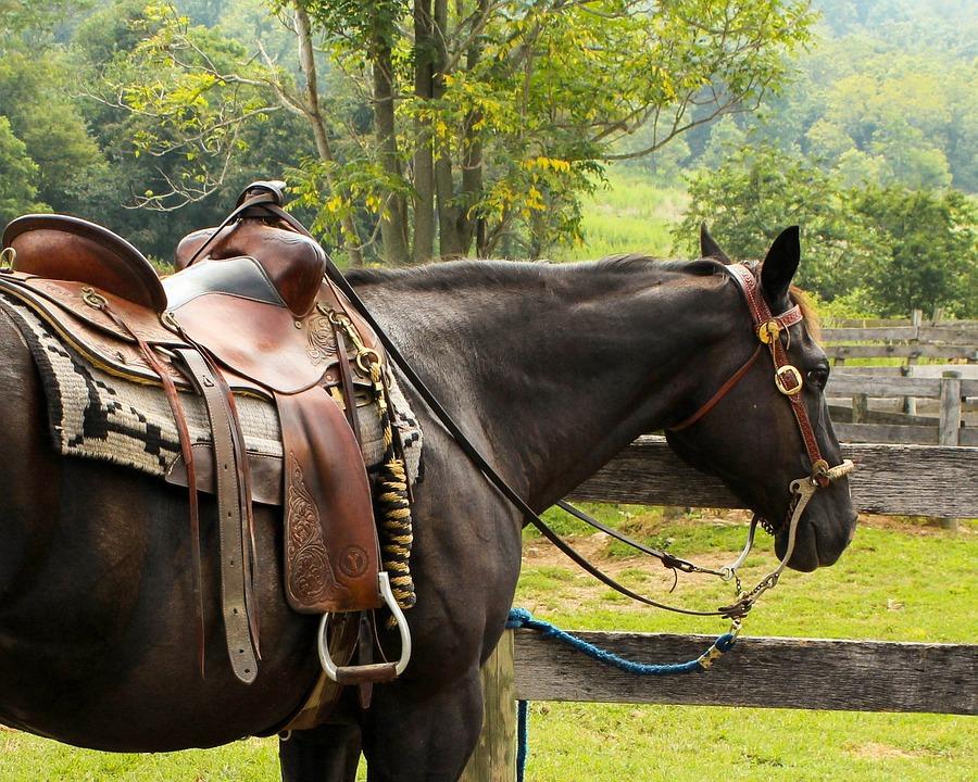 horse-176990_960_720