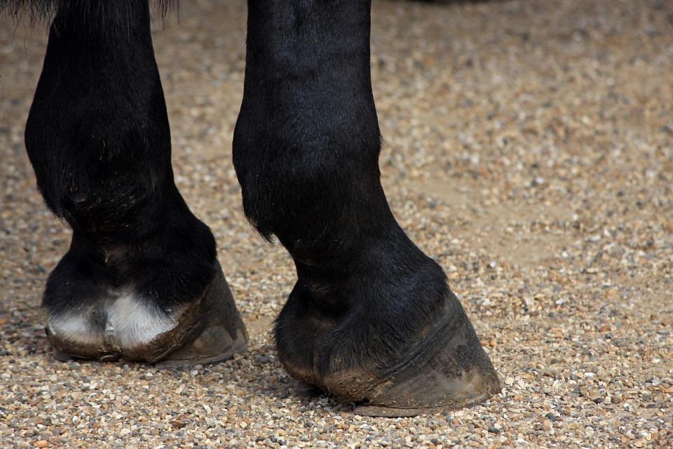 horses-hooves-164940_960_720