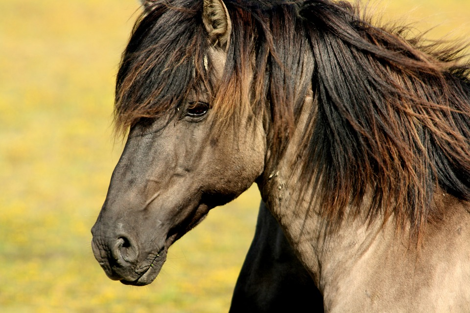 horse-337215_960_720