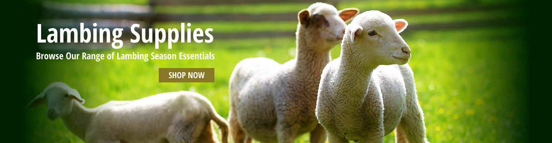 Browse Our Lambing Supplies