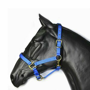 Hy Deluxe Padded Head Collar - Full Size