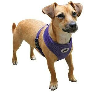 MIRO&MAKAURI Air Mesh Step In Vest Harness - Purple