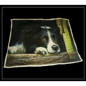 Collie Throw Country Matters