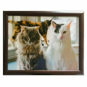 Cat Trio Lap Tray Country Matters