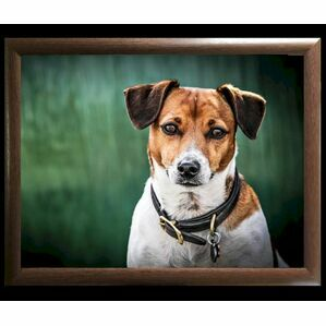 Amber Jack Russell Lap Tray Country Matters